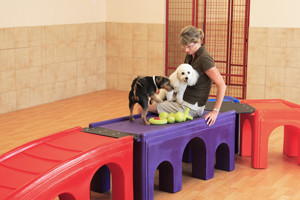 Pet Daycare Services